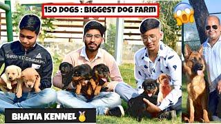 INDIA'S BIGGEST DOG KENNEL | BHATIA DOG FARM  | NILOKHERI
