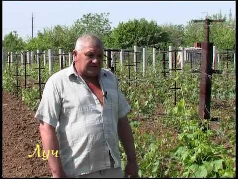 Секреты виноградарства (защита от болезней).