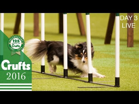 Day 3 Live | Crufts 2016