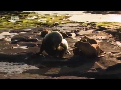 Чудеса голубой планеты [3_7] Южная Америка - Видео онлайн