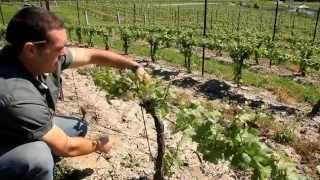 A Year in the Vineyard  the Four Seasons HD