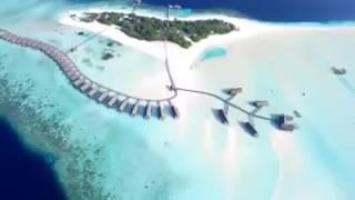 Я ❤ Мальдивы! #МореОтдыха #moreotdyha #отпуск #мальдивы(, 2016-07-17T19:19:35.000Z)