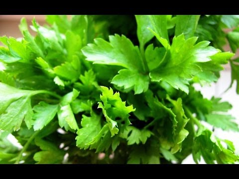 How to Grow Parsley from Seed - Organic Vegetable Gardening