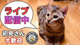 猫ライブです!やんちゃなベンガル一家の定期配信です! 質問はお気軽に   今後の活動予定もお話ししながらベンガルと過ごします   今回は...