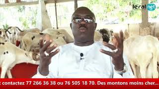 Opération Tabaski : Khadim Samb vous propose des moutons de race pour fêter l'Aïd El Kebir