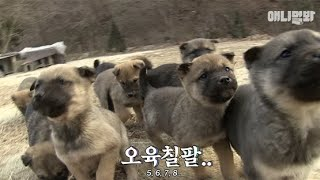 who-would-leave-such-a-cute-army-of-puppies