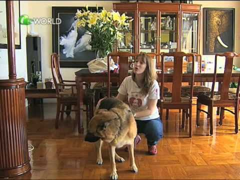 Inside Story - Dr Dog Animal-therapy programme thumbnail