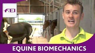 Equine Biomechanics - FEI Equestrian Snapshots