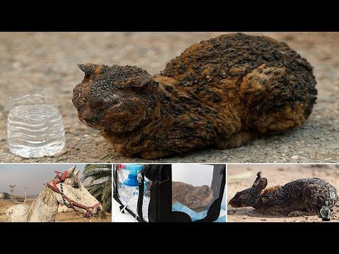 The Animals Caught In California's Wildfires