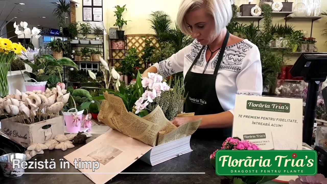Floraria Trias Aranjamente Florale Din Plante La Ghiveci Youtube