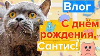 Надежда Матвеева и кот Сантис //Коты ютуберы // Приколы