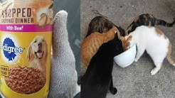 Cats Love Eating Pedigree Dog Food