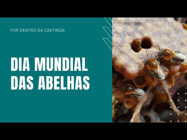Você conhece a abelha Jandaíra? - Dia Mundial das Abelhas
