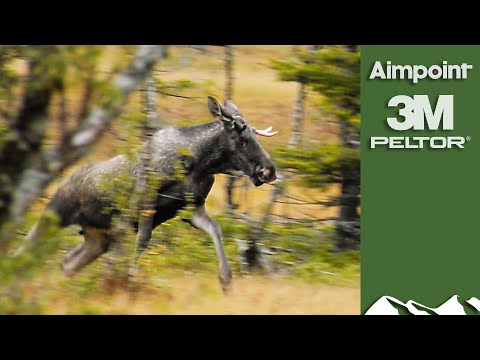 Majestic Swedish Moose Hunt