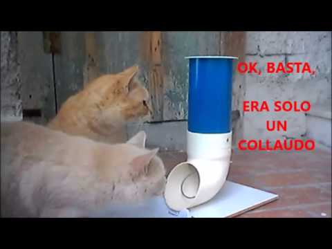 Distributore croccantini fai da te tutorial youtube for Impermeabile per cani fai da te