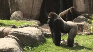 Zoo Animal Birthdays - The Real Wild Animals of New Orleans