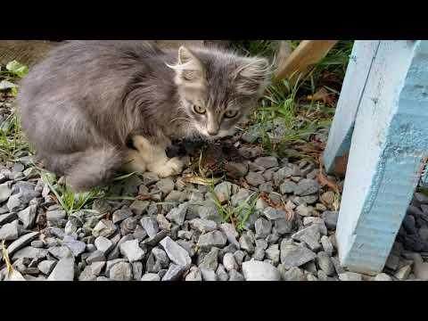 Кошки против лягушки)))