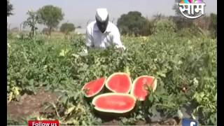 Ahemadnagar based Raju Gunjals watermelon farming success story