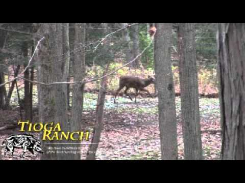 Whitetail Deer Hunting In PA - 180
