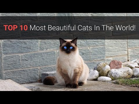 🐈 Most Beautiful Cats – Top 10 Most Beautiful Cat Breeds In The World 2020!