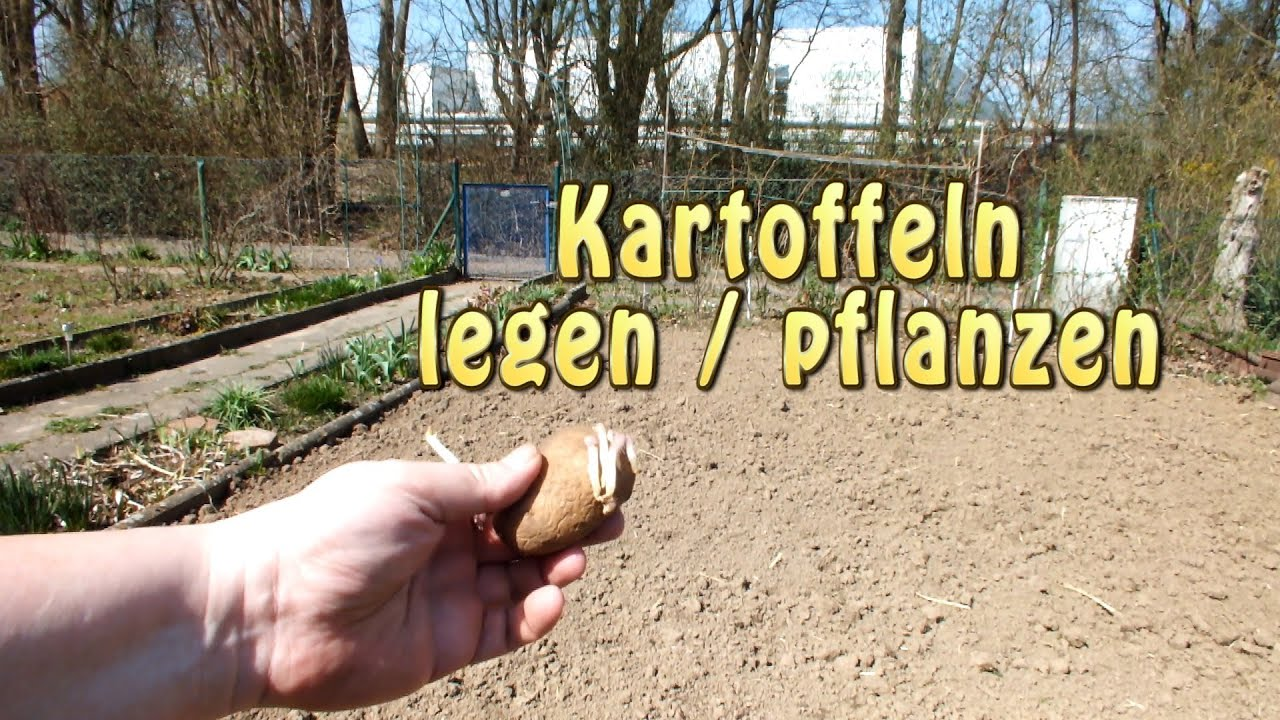 Kartoffeln Legen 2013 Youtube