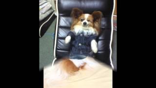 2015年1月5日に永眠いたしました愛犬『ライカ』 告別式で流してい...