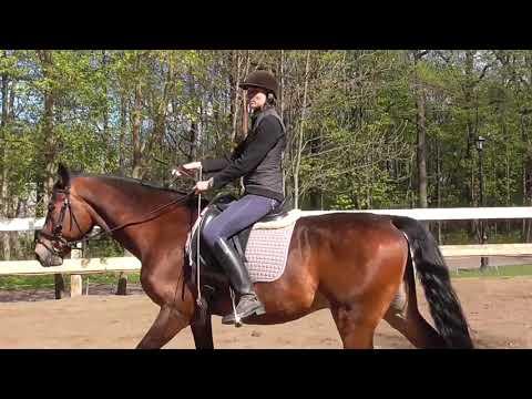 Вопрос: Как приподниматься во время езды рысью на лошади?