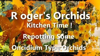 Kitchen Time! - Repotting Some Oncidium Type Orchids