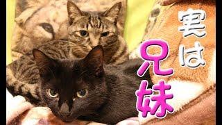 我が家の猫の紹介動画その3です。 今回紹介するのは虎太郎(こたろう)...
