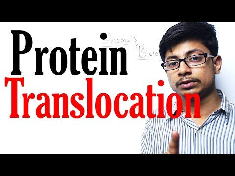 Protein translocation