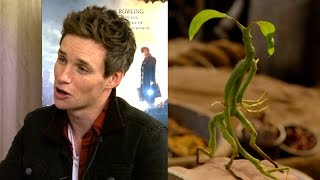 Eddie Redmayne - favourite beasts and spells - Fantastic Beasts EXCLUSIVE INTERVIEW