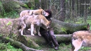 Medical Center to wild wolves in the woods