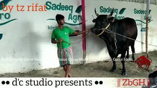 003 | Eid ul Azha 2017 | Bull Show Time | Sadeeq Agro | ZbGH 2018