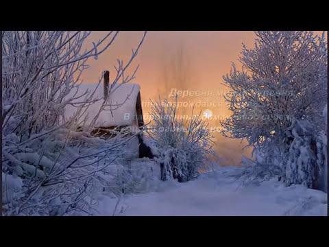 На снегу калина