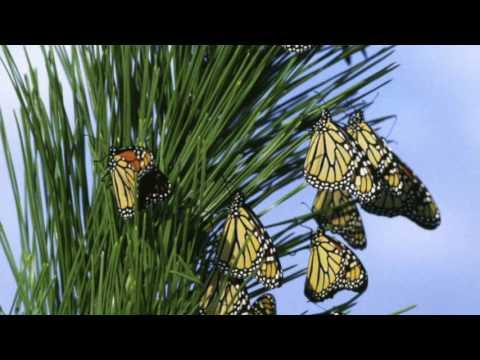Monarch Conservation - Patuxent Research Refuge