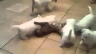O pisicuta este inconjurata de pufosenii adorabile :))