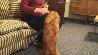 Dog Training - Hearing Dogs For Deaf People