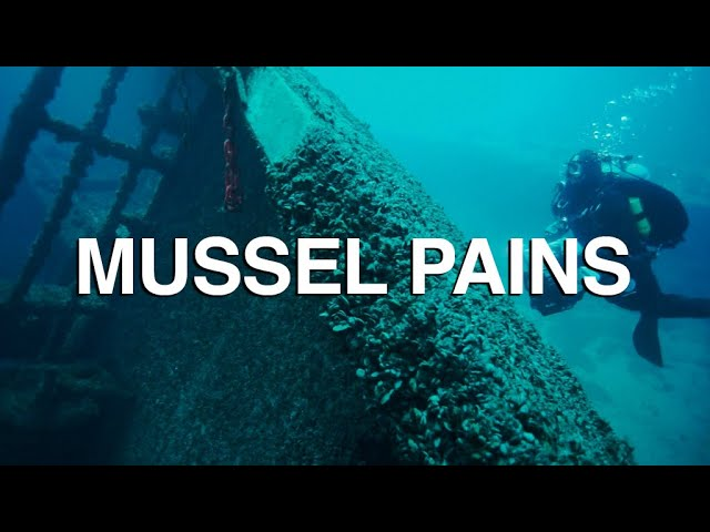 Mussel Pains - Great Lakes Now Full Episode - 1023