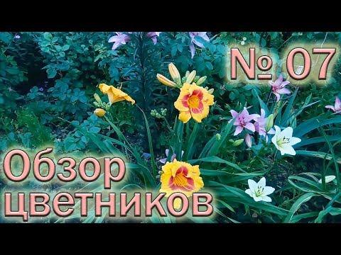 Обзор цветников №7 (9.06.2018). Лилии, лилейники, хризантемы, розы, портулаки