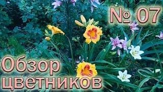 обзор цветников 7 (9.06.2018). Лилии, лилейники, хризантемы, розы, портулаки