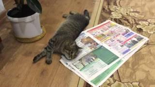 Смешные коты. Марсик - кот казанский