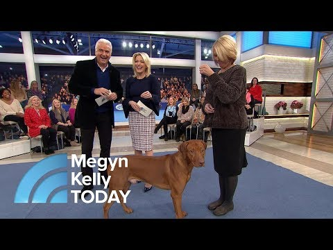 John O'Hurley Ps The National Dog  And Its Furry Contestants  Megyn Kelly TODAY