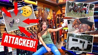 TACK SALE ! + Chicken Attacked By Hawk | BARN VLOG