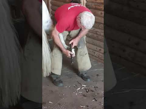 Guide: How to clean Horse's Hoof