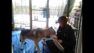 """Dog and Wolfdog Training Tips: The Beginings of """"Leave It"""""""