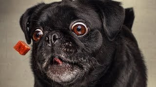 Лучшие Приколы про собак | Подборка приколов про собак и щенков #4