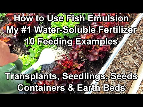 How to Use Fish Emulsion in Your Garden with 10 Feeding Examples: Ratio, Frequency & Amount to Pour