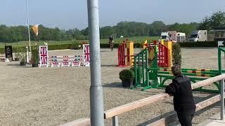 9yo Eldorado gelding with student girl riding