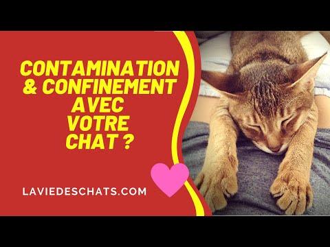 Contamination & confinement avec votre chat ��- Vos images