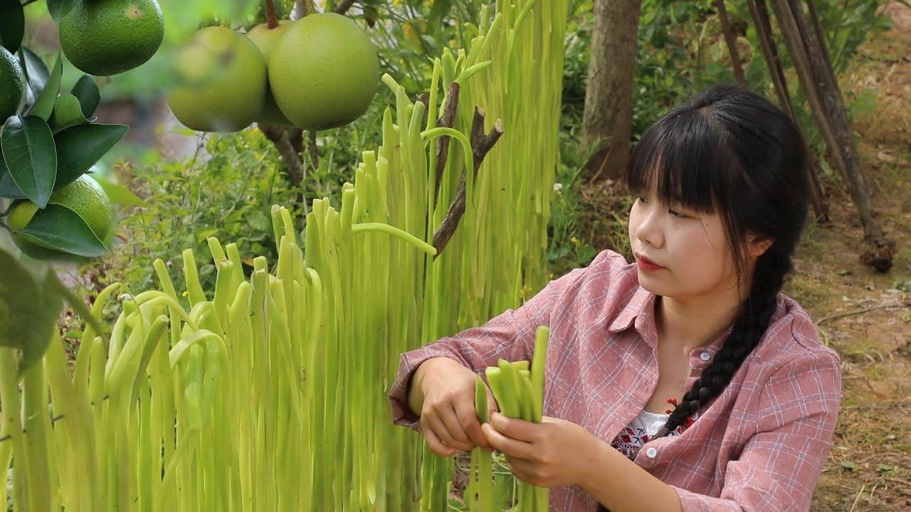 【二米炊煙】Gong Cai, Special Crispy Chinese Food 用6個月時間收穫一種神奇的食物,咀嚼時會發出清脆的響聲